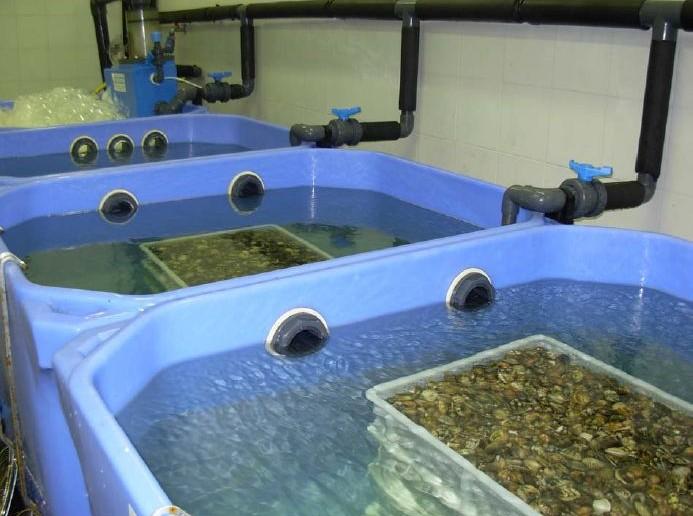 Trasporto di molluschi